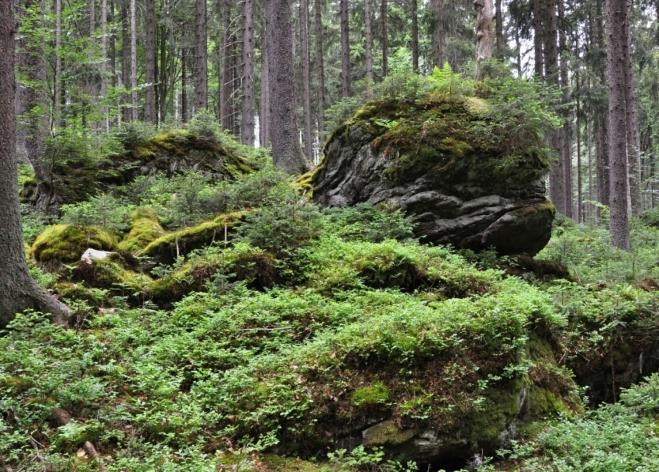 Mezi vrcholy Poledního vrchu a Homolí je mnoho skalek.