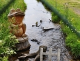 Žabák u vodního mlýnku.