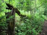 Vnímáme čerstvou zeleň zmlazujícího se lesa. Dotekem, zrakem i čichem...