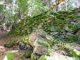 Nad Pašteckým potokem kdysi lidé hospodařily. Les dnes zakryl většinu jejich stop. Příroda si časem vezme vše zpět, vesnice, cesty, i zídky kolem nich.