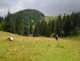 Blížíme se ke Kral'ovo skale. Louka je pastvinou a tak v údolí chvilku musíme překonávat kopyty krav rozbahněný terén.