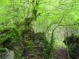 Skoro se zdá, že vytrvalé deště zmladily listí buků, které září jako zjara.