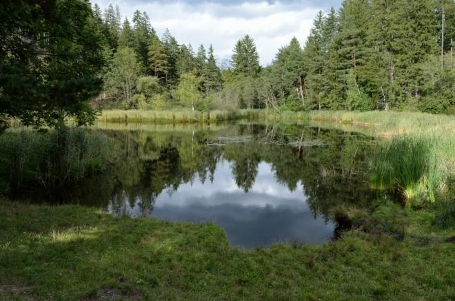 """Půlhektarové jezírko zvané Lanser Moor či Seerosenweiher (""""leknínový rybník""""), které potkávám na jižním okraji lesa, je chráněnou přírodní památkou. Vzniklo v prohlubni po ledovci."""