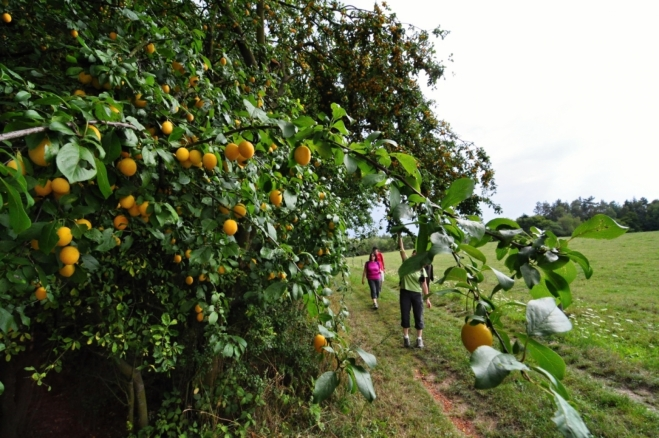 Cestou se posilníme mnoha druhy plodů ovocných stromů.