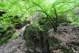 Močidla jsou chladnou a vlhkou roklí. To je poznat na zdejší vegetaci.