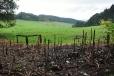 Ve Slavkovském lese se na více místech rozmohl bolševník, který byl kdysi vysazený jako okrasná rostlina, a dnes se ho krajina jen těžko zbavuje. Toto spáleniště je důkazem.