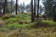 Hadcové podloží skrývá vzácné byliny jako např. zimostrázek nízký, hvozdík lesní, vřesovec pleťový a mnoho vzácných druhů hadcových kapradin.