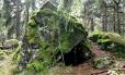 Vlčí kámen (883 m n. m.) je i přírodní rezervací Vlček, kde opět převažují hadcové skalky a na ně navazující biotop. Zde jsme ovšem v lese.