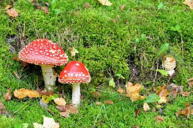 Prosíme houby netrhat! U většiny hub je i cedulka s názvem. Kolem hradů a zámků tak můžeme obdivovat hřiby, křemenáče, různé holubinky a mnoho dalších druhů. Prostě rostou!