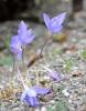 Jen vytrvalé bylinky kvetou ještě v říjnu.