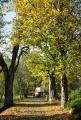 Cesta kolem Prášilského potoka vede krásnou krajinou.