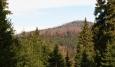 Vrchol Ždánidel na dosah. Zrovna dnes se na vrchol l. zónou NP pořádá další výstup s průvodcem divočinou. My ušetříme 230 korun a užijeme si ji též.