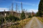 Vzhůru za souškami a výhledy. Z této cesty na Poledník byl dříve vidět Javor, jinak nic. Okolí stínila zrakem neprostupná hradba vysokých zdravých stromů.