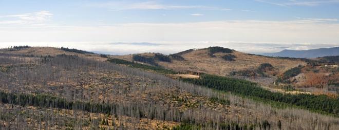Hraniční hory měly tu čest poznat sílu lýkožrouta smrkového jako první.