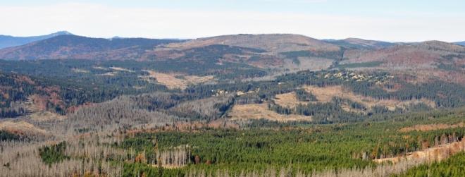 Nebýt v devadesátých letech vysazených stromů, byla Šumava v této části zralá jen na černobílé foto. V pozadí vlevo Gross Arber-Velký Javor a Falkenstein, který se v Bavorsku kácením napadených stromů kůrovcem snaží uchránit před osudem sousední Plesné.