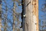Časem stromy svalí vítr a poslední stopy po Železné oponě navždy zmizí.