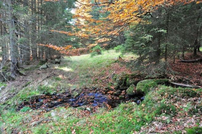 Podmáčený terén v okolí potoků trochu znesnadnil chůzi.