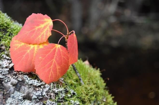 Paleta barev podzimu je nekonečná.
