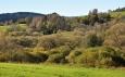Zarůstající pastviny u Planské.