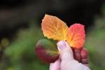 Co barevných listí vítr svál do prázdných dlaní, co v tichu podzim zanechal, kalná jsou jitra kouzelníků a život je vzácný dar ...