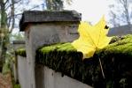 Do zahrady lenorského zámku se bohužel nedostanrme a tak do ní jen nahlížíme přes vysokou zídku.