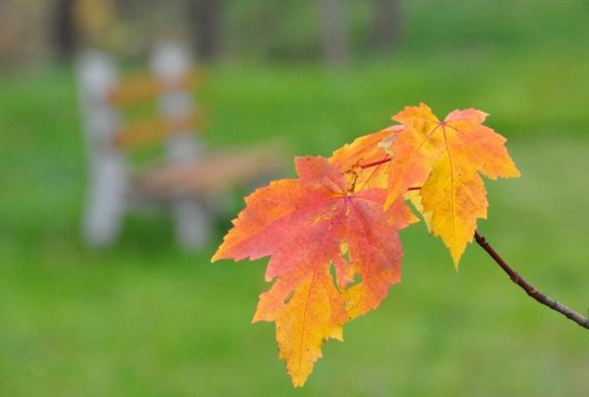 Variace na podzimní téma.