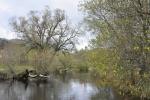 Teplá Vltava u Houžné na svém břehu skrývá malý kemp. Zdatní vodáci odsud sjíždí řeku k Soumarskému Mostu a Pěkné.