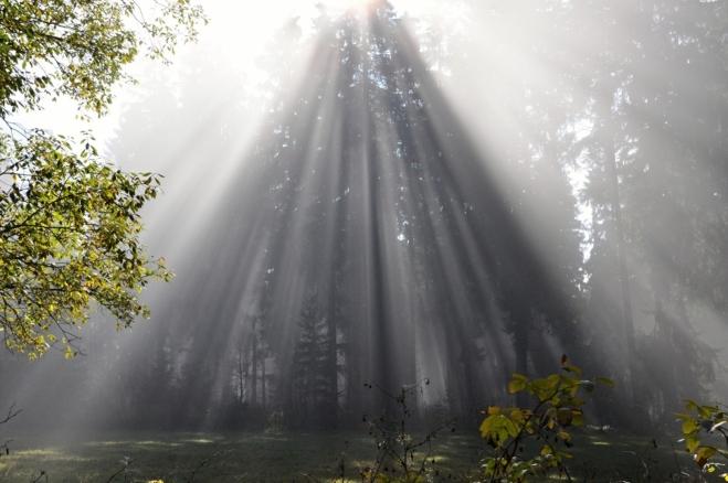Jaká je tohle síla? Boží nebo made in Nature?