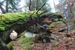 Strom přelomený o vrcholek skály u nejvyššího bodu hory.