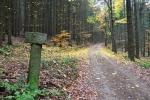 Křižovatka lesních cest.