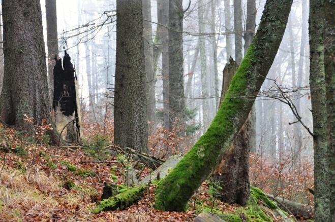 Ze stromu zasaženého bleskem téměř nic nezbylo.