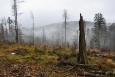 Výhledy k Václavově hoře a V Pařezí silně omezuje povalijící se mlha.