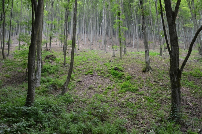 Bukové lesy nemohou na Bukových horách chybět.