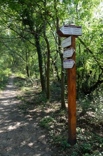 Tak už jsme opět na správné trase, po zapadlých pěšinách budeme křižovat pralesovité porosty jižně od jezera.
