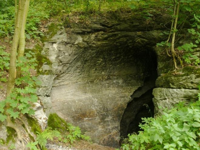 Vstup do jeskyně obklopený lesem