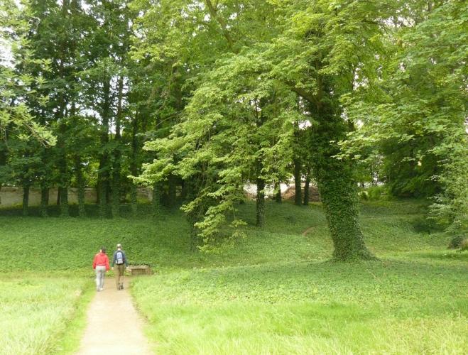 Stromy obrostlé břečťanem