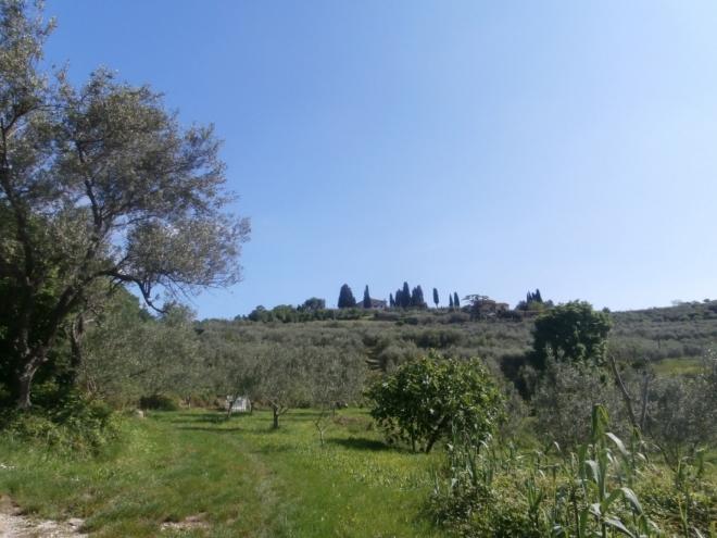 Vinohrady poblíž Izoly