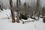 Okolí pramene doplatilo na kůrovcovou kalamitu. Usmrcené stromy stále padají k zemi.