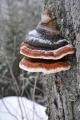 Černobílou zimu dovedou oživit maličkosti.