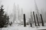 Jak by asi dopadly lesy Šumavy, kdyby se kůrovcová kalamita ponechala bez zásahů, které nakonec vynuceně přišly? I tak bude mít zanedlouho téměř každý obyvatel Česka svůj suchý strom.
