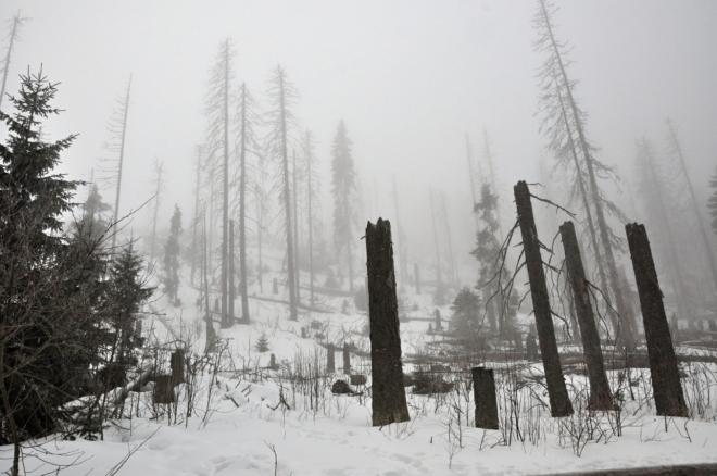Jak by asi dopadly lesy, kdyby se kůrovcová kalamita ponechala bez zásahů, které nakonec vynuceně přišly? I tak bude mít zanedlouho téměř každý obyvatel Česka na Šumavě svůj suchý strom.