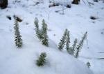 Lesní miniatury.