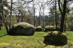 Přírodní památky skrývá mnoho oblých balvanů, některé jsou i výš v lese.