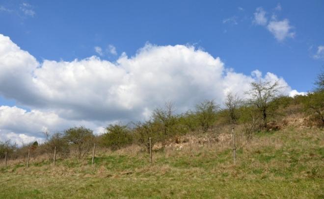 Kozinec - vápencový hřeben s výrazně odlišnou flórou.
