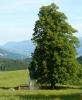Kaplička se schovává ve stínu mohutného stromu. Dříve byla zřejmě chráněna dvěma velikány, ale jeden už padl nebo byl poražen.