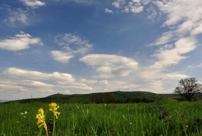 Začátkem května mnoho vzácných bylinek nekvete, prvosenka je jednou z prvních.