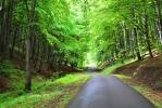 Cestou k Vršateckému Podhradí lze vyjet autem a mnoho turistů to také dělá. Naučnou stezku kolem Vršateckých bradel si tím ale stejně o moc nezkrátí. Jen jinde začnou a skončí.