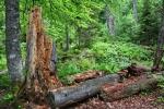 Rozdíl proti Šumavě je i v tom, že se zde nachází předevšIm smíšený les. Kůrovec zde zapracoval též, ovšem jen v nejvyšších hřebenových partiích.