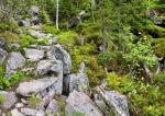 Teufelsjoch je místo, kde kamenné moře pohřbilo potok Kleine Ohe ve svých hlubinách.
