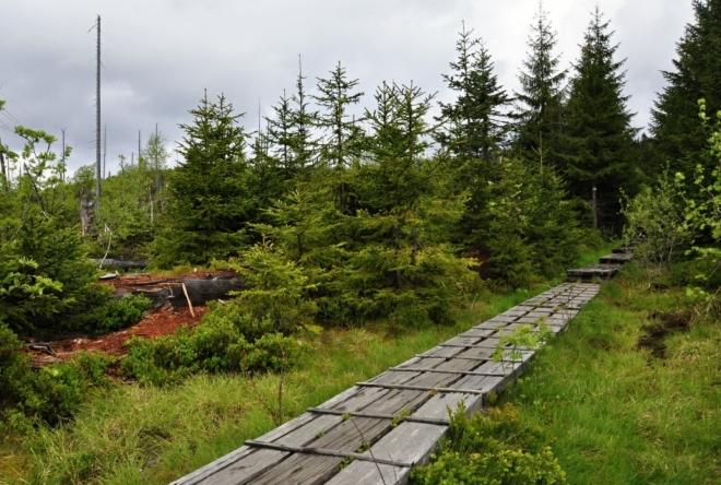 Mokřady pod Luzným jsou prameništěm potoka Sägwasser.
